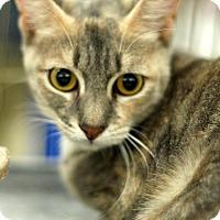 Adopt A Pet :: Tubby - Sacramento, CA