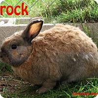 Adopt A Pet :: Brock - Santa Maria, CA