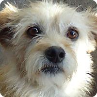 Adopt A Pet :: Rani - San Diego, CA
