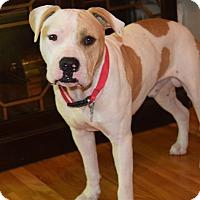 Adopt A Pet :: NINO - MILWAUKEE, WI