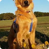 Adopt A Pet :: Leo AKA Bronco - Weatherford, TX