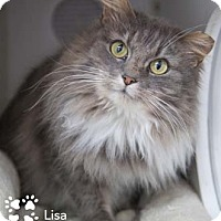 Adopt A Pet :: Lisa - Merrifield, VA