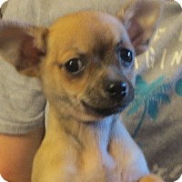Adopt A Pet :: Flynn - Westport, CT
