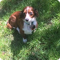 Adopt A Pet :: Lydia number 3 in AR - Columbia, TN