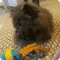 Adopt A Pet :: Coal - Richmond, VA