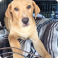 Adopt A Pet :: Blake - Irmo, SC