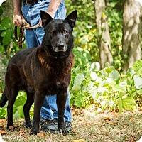 Adopt A Pet :: Damon - Clarkesville, GA