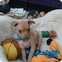 Adopt A Pet :: Sebastian - Thousand Oaks, CA