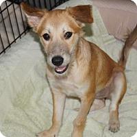 Adopt A Pet :: 'LEMON' - Agoura Hills, CA