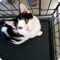 Adopt A Pet :: Tom - Ringgold, GA