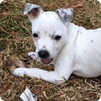 Terrier (Unknown Type, Medium) Mix Dog for adoption in Mobile, Alabama - Bruno