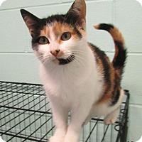 Adopt A Pet :: Carla - Warrenton, NC