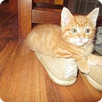 Adopt A Pet :: Big Red - Rochester, MN