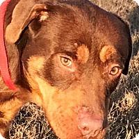 Adopt A Pet :: Schuyler - Lebanon, ME