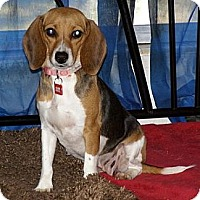 Adopt A Pet :: Ivy - Palm Bay, FL