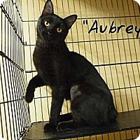 Adopt A Pet :: Aubrey - Ocean City, NJ
