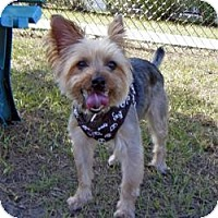 Adopt A Pet :: Spike - Spring Hill, FL