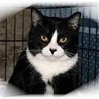Adopt A Pet :: Quinn - Montgomery, IL