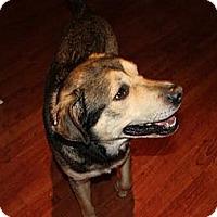 Adopt A Pet :: Charmander (Charlie) - Hamilton, ON