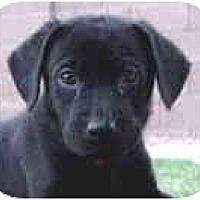 Adopt A Pet :: Mustique - Scottsdale, AZ