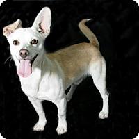 Adopt A Pet :: Chip - Lufkin, TX