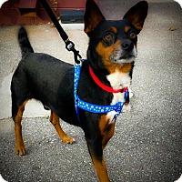 Adopt A Pet :: Rudy - Homewood, AL