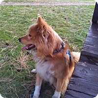 Adopt A Pet :: Cubby - Chewelah, WA