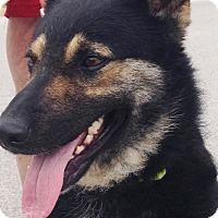 Adopt A Pet :: Baron - Wimberley, TX