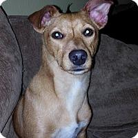 Adopt A Pet :: Puppy Alert!  Wilson - North Bend, WA