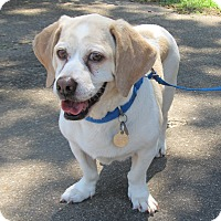 Adopt A Pet :: Mozart - Kingwood, TX