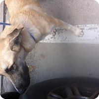 Adopt A Pet :: Coop - springtown, TX