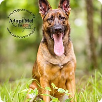 Adopt A Pet :: Jax - Ormond Beach, FL