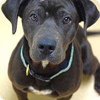 Adopt A Pet :: Johnny - Dublin, CA