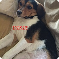 Adopt A Pet :: DIXIE - Ventnor City, NJ