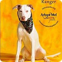 Adopt A Pet :: Ranger - Topeka, KS