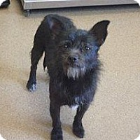Adopt A Pet :: Lexie - Las Vegas, NV