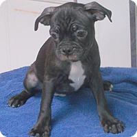 Adopt A Pet :: Dante - Birch Tree, MO
