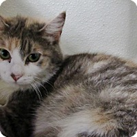 Adopt A Pet :: Peaches - Grinnell, IA