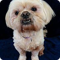 Adopt A Pet :: Ben Turner - Urbana, OH