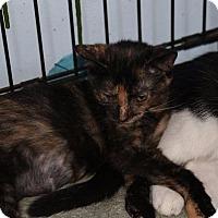 Adopt A Pet :: Camille - Ann Arbor, MI