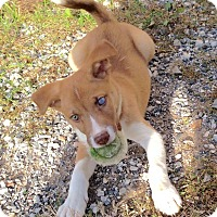 Adopt A Pet :: Brody - New Oxford, PA