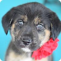 Adopt A Pet :: Ethel - Denver, CO