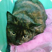 Adopt A Pet :: Chanel - Franklin, NH