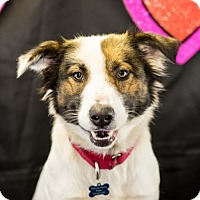 Adopt A Pet :: Prue - Little Rock, AR