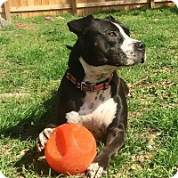 Adopt A Pet :: Lulu - Seabrook, NH