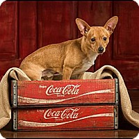 Adopt A Pet :: Henry - Owensboro, KY