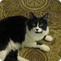 Adopt A Pet :: Hailey - Los Angeles, CA