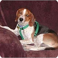 Adopt A Pet :: Buckey - Phoenix, AZ