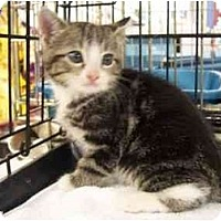 Adopt A Pet :: Spike - Frenchtown, NJ