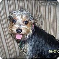 Adopt A Pet :: Chloe - Andrews, TX